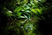 jungle-1340466209nfD